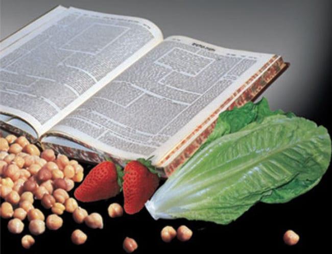 """""""בדיקת המזון כהלכה"""" מאת הרב משה ויא"""