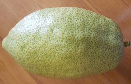 סגולות פרי האתרוג
