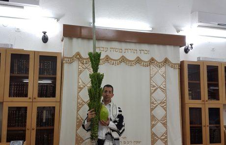 אחרי שכבר היה לו אתרוג גדול במיוחד, מציג השנה יוסי פרחי מנתניה לולב ענק באורך 3.03 מטר!