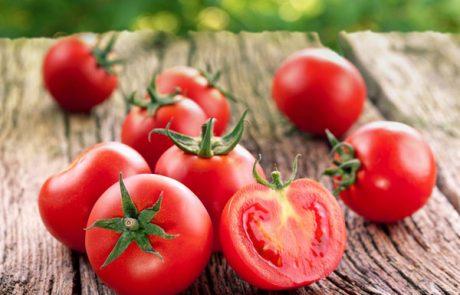 מנפלאות העגבנייה